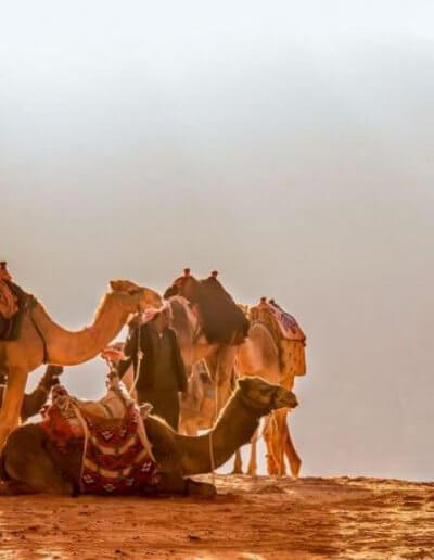 Privát Jordánia utazás tevék