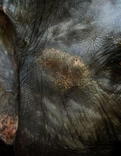 Privát utazás Burma elefánt