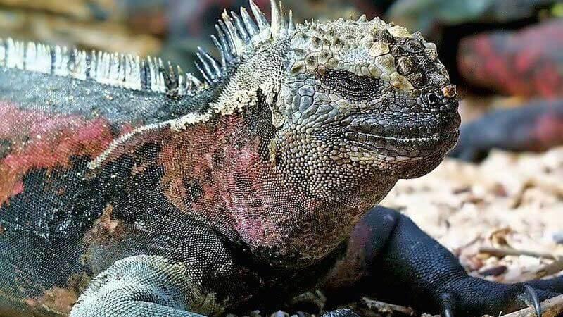 Privát Galápagos-szigetek utazás