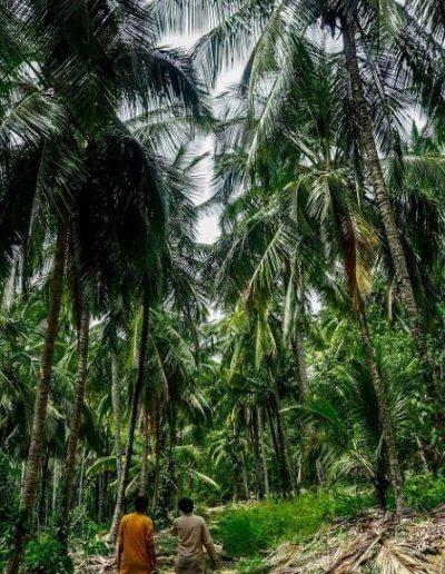 Privát utazás India dzsungel