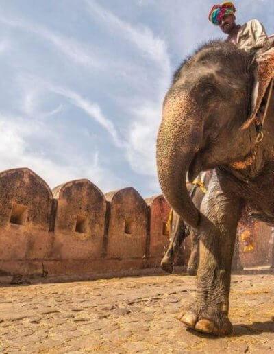 Privát utazás India elefántolás