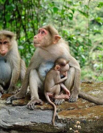 Privát utazás India majmok