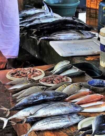 Privát utazás Sri-Lanka halpiac
