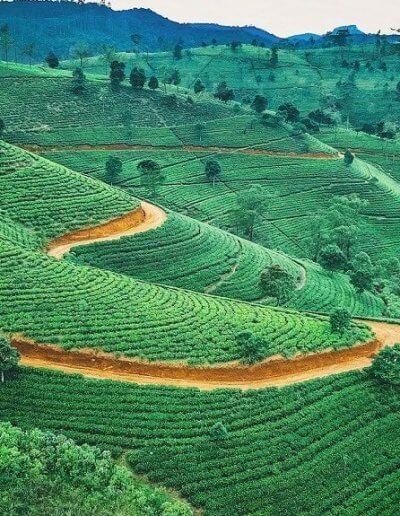 Privát utazás Sri-Lanka Nuwara Eliya