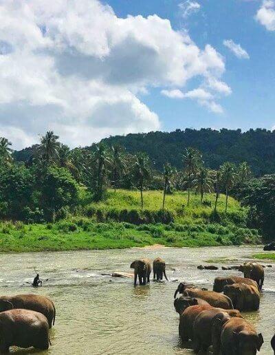 Privát utazás Sri-Lanka Pinnawela