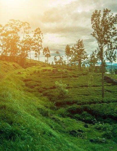 Privát utazás Sri-Lanka vonat