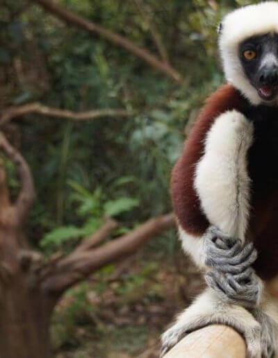 Privát utazás Madagaszkár lemur