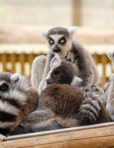 Privát utazás Madagaszkár maki