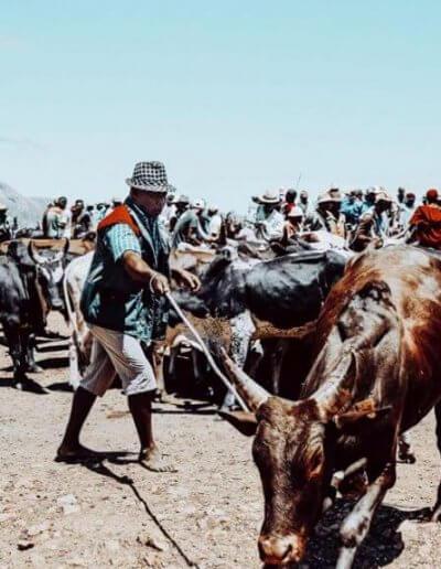 Privát utazás Madagaszkár ökör