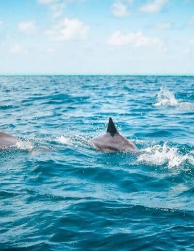Privát utazás Mauritius delfinek