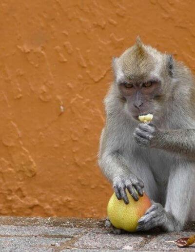 Privát utazás Mauritius majom