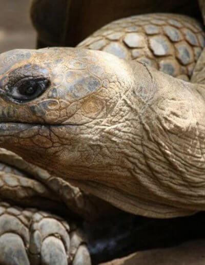 Privát utazás Mauritius teknős
