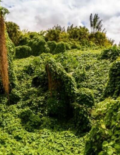 Privát utazás Mauritius trópusi növényzet